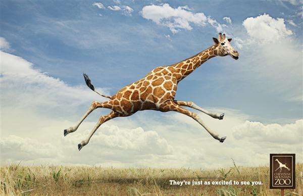 CheyenneMtnZooGiraffe1