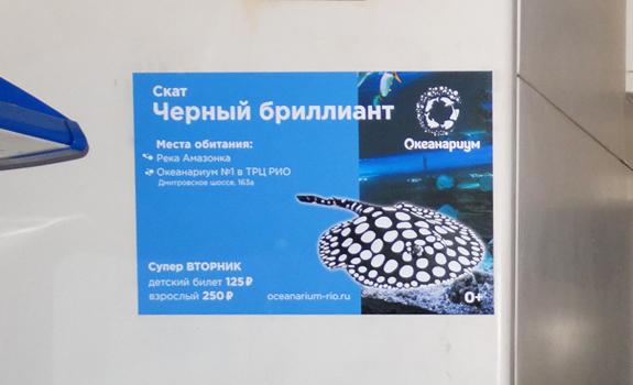 Реклама в электричках Савеловское направление