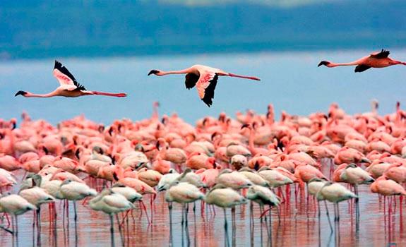 flamingos_cyprus